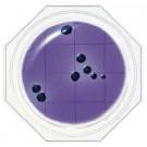 Testy na obecność bakterii i grzybów Food Stamp